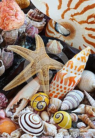 Sea Shells, Sea Star on beach