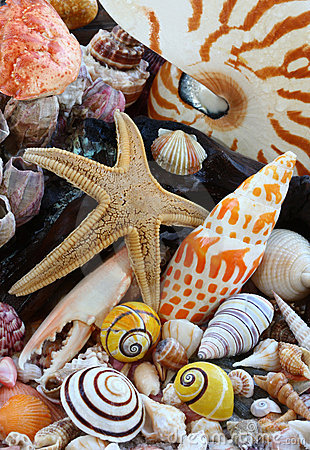 Free Sea Shells, Sea Star On Beach Stock Image - 20517001