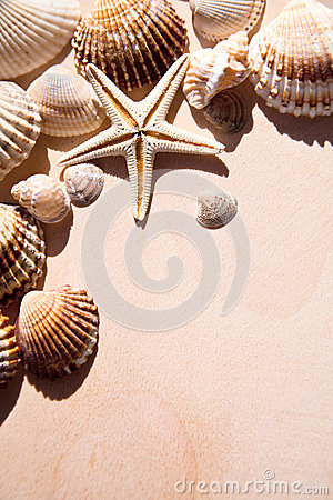 Sea shells and star closeup