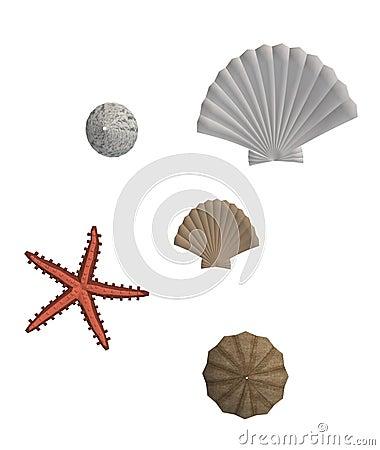 Sea Shells And Star Fish