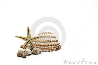 Sea Shells And Starfish