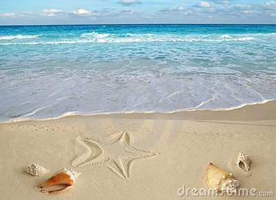 Sea shells starfish tropical turquoise caribbean