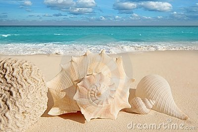 Sea shells starfish  turquoise caribbean