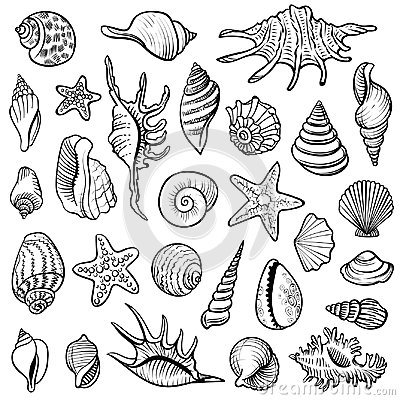 Free Sea Shells Vector Line Set. Black And White Doodle Illustrations. Stock Photos - 115069763