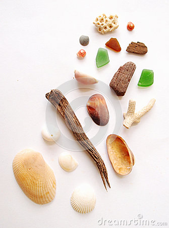 Free Sea Shore Items Collection Royalty Free Stock Photo - 29683425