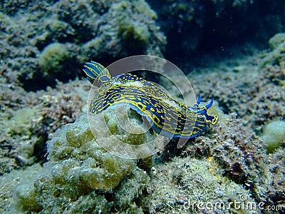 A Sea Slug