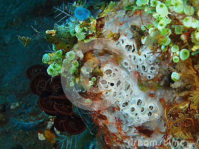 sea squirt for sale Feb 2014.