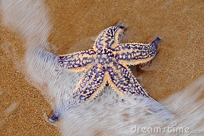 Sea star on beach