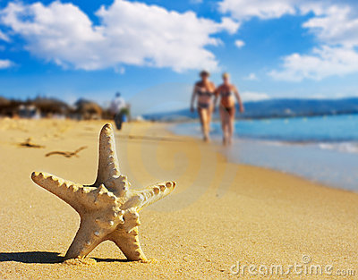Sea star on the beach