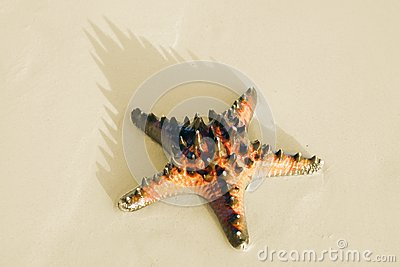 Sea star on the sand.