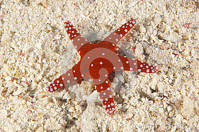 Sea star on a sandy seabed
