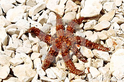 Sea star sitting on stoned beach