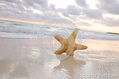 Sea star starfish on beach, blue sea and sunrise