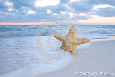 Sea star starfish on beach, blue sea and sunrise