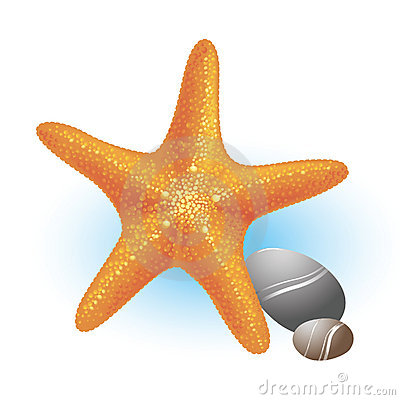 Sea starfish with the stones