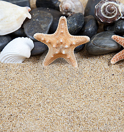 Sea stars rocks and shells