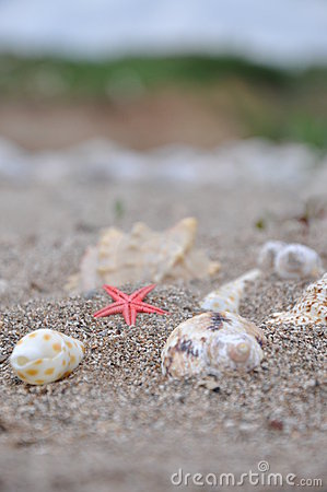 Sea stars between the two shells