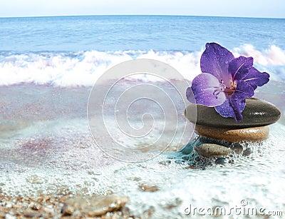 Sea still life