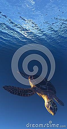 Sea Tortoise Descending