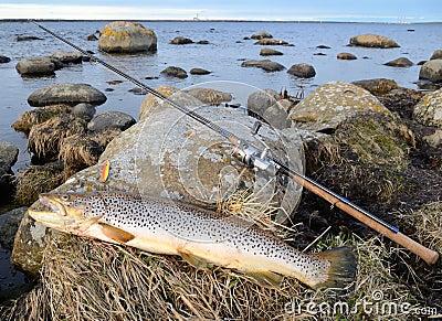 Sea trout fishing trophy