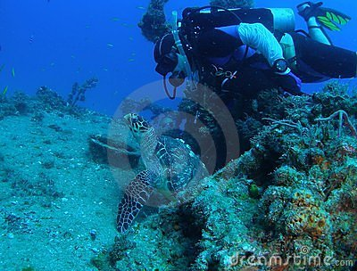 Sea Turtle with Diver