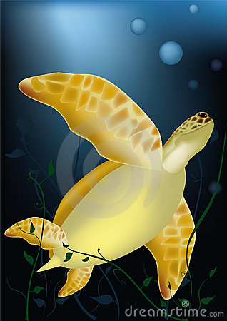 Sea turtle at ocean