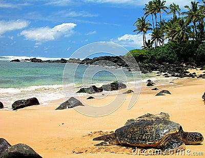 Sea Turtle Resting