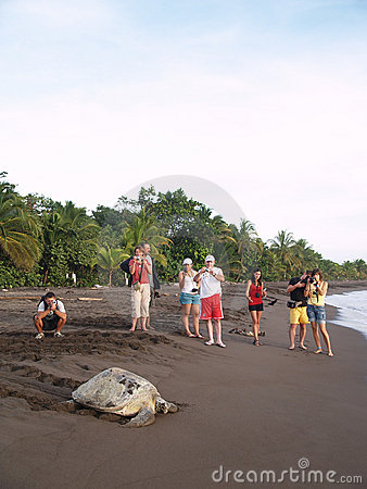 Sea turtle in Tortuguero National Park, Costa Rica Editorial Stock Photo