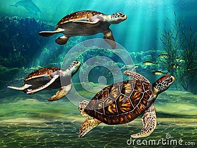 Sea Turtles Stock Image Image 33684311