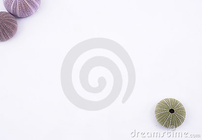 Sea urchin background