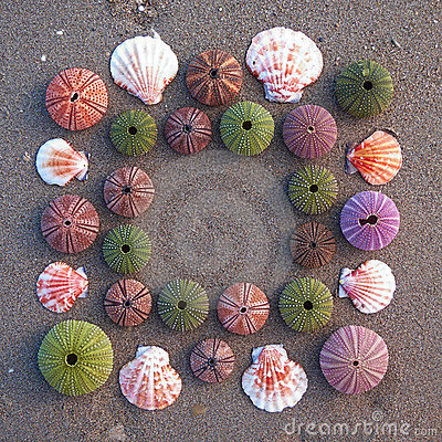 Sea urchins and shells on wet sand frame