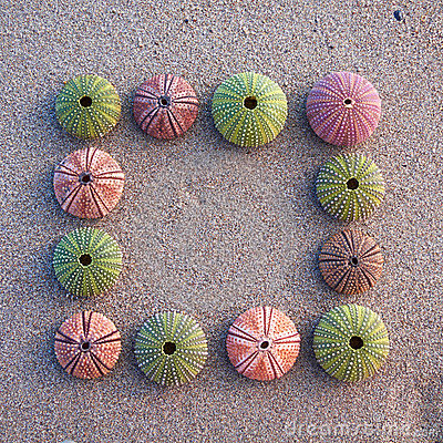 Sea urchins on wet sand frame