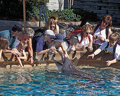 Sea World Dolphin Touch Pool - Orlando Editorial Photo