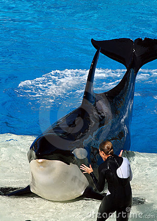 Free Sea World San Diego - Orca And Trainer Royalty Free Stock Photography - 13109277
