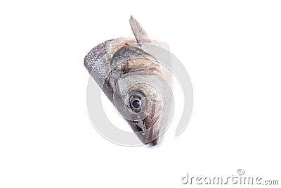 Seabass head close up.