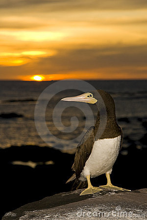 Free Seabird Royalty Free Stock Images - 12144409