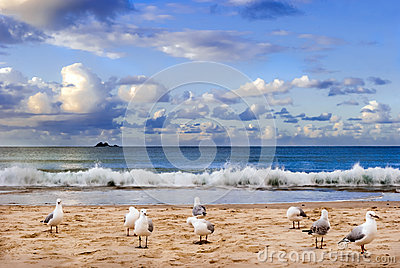 Seabirds on a beach