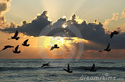 Seabirds flying at sunset