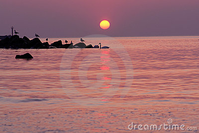 Seabirds silhouetted on water