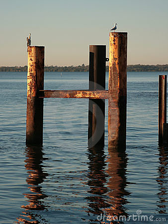 Seabirds on wooden jetty