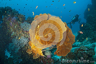 Seafan With Diver, Thailand. Royalty Free Stock Photos - Image: 28745398