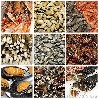 Free Seafood Collage Royalty Free Stock Photography - 14383317