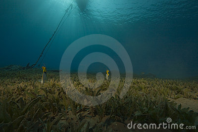 Seagrass and fish