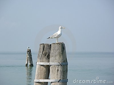 Seagul on the Bricola