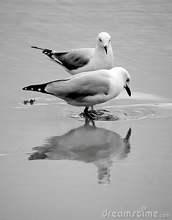 Free Seagull Royalty Free Stock Photo - 1944525