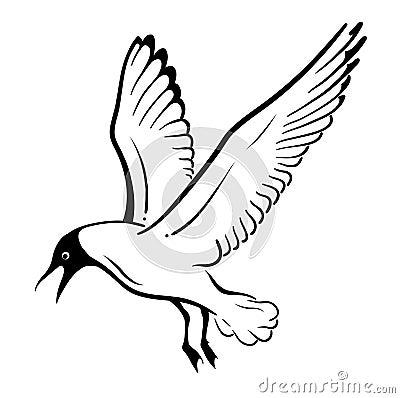 Free Seagull Royalty Free Stock Photos - 21829248