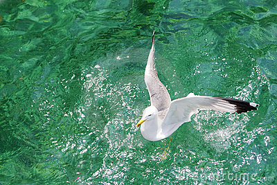 Seagull on the aegean sea