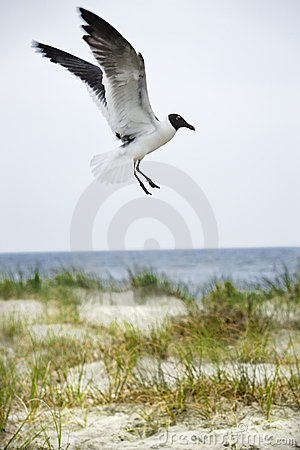 Free Seagull At Beach. Stock Photos - 2046103