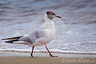 Seagull on beach