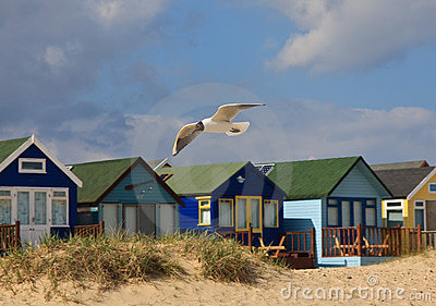 Seagull and Beach Huts